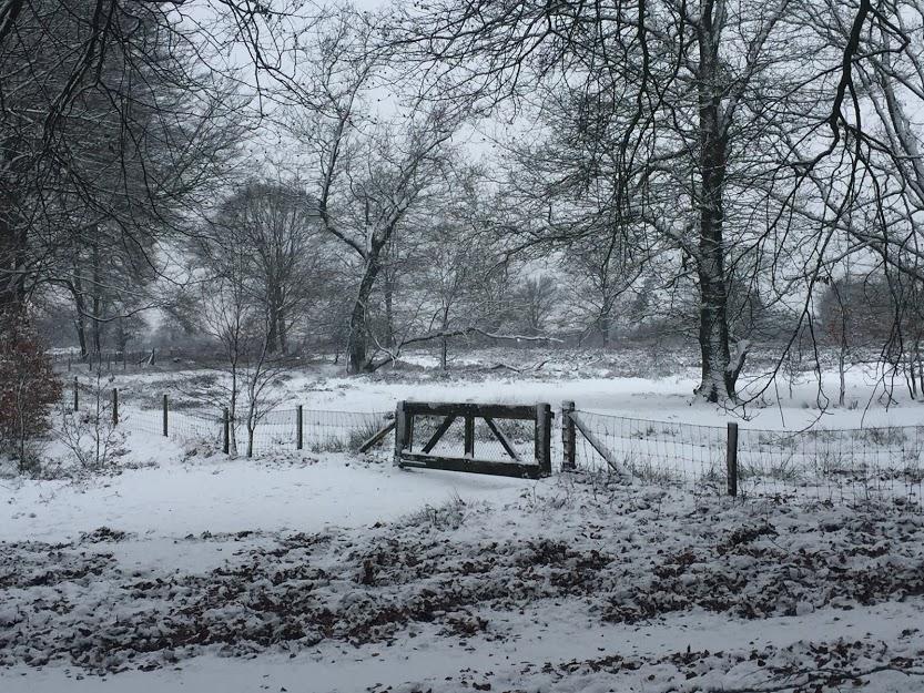 Stuur je sneeuwfoto in voor op ons TV kanaal